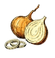 Onion hand drawn Isolated vector image