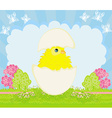 Cute Easter chicken in egg shell vector image