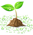 Beautiful young sprout vector image