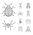 design of insect and fly symbol set of vector image vector image