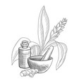 drawing turmetic essential oil vector image vector image