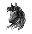 Horse head watercolor sketch portrait vector image