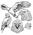Eagle Tattoo Set vector image vector image