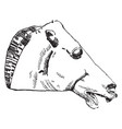 horse head is found at the parthenon in athens vector image vector image