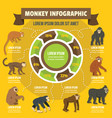 monkey infographic concept flat style vector image vector image