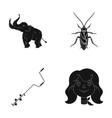 scout history nature and other web icon in black vector image vector image