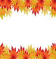 autumn maple leaves on a white background vector image
