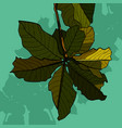 painted inflorescence of green leaves of a tree vector image vector image