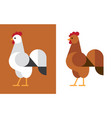 rooster flat icon vector image