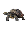 galapagos turtle from a splash watercolor vector image vector image