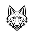 head of a coyote front view mascot black and white vector image vector image