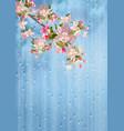 spring flowers rain vector image