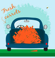 blue car with lot of carrots vector image