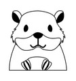 hamster rodent on white background vector image