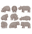 set of large gray hippo in different actions vector image