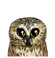 cute owl portrait full color sketch hand drawn vector image