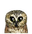 cute owl portrait full color sketch hand drawn vector image vector image