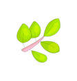 pink branch icon with cartoon green leaves green vector image vector image