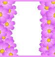 pink cosmos flower border vector image