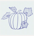 pumpkin with leaves blue outline drawing on vector image vector image
