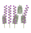 set color with mimosa flowers vector image vector image