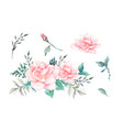 watercolor pink roses vintage design set vector image vector image