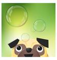 hello spring season background with pug dog vector image