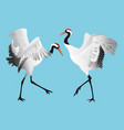 japanese dancing red-crowned crane in different vector image vector image
