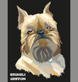 colored brussels griffon portrait vector image vector image