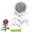 numbers game flower aster vector image vector image