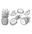 sketch pineapple isolated hand drawn ananas vector image