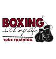 true training 6 box color vector image