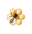 a bee on honeycombs vector image