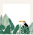 trendy banner with tropical leavestoucan bird vector image