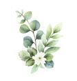 watercolor hand painted bouquet with green vector image vector image