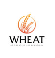 wheat rice nutrition logo inspiration vector image vector image