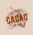 chocolate cocoa beans vector image