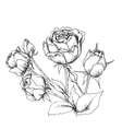 Highly detailed hand drawn roses vector image vector image