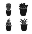 isolated object of cactus and pot icon set of vector image vector image