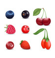 realistic detailed 3d different berries set vector image vector image