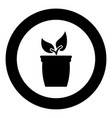 flowerpot or pot with plant icon black color in vector image vector image