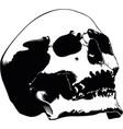 skull hand drawn image vector image vector image