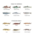 Fish set in flat style design Herrings and vector image vector image