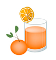 Glass of Orange Juice and Oranges Fruit vector image