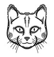 painted head of cat vector image