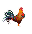 Cartoon rooster Isolated object for design element vector image vector image
