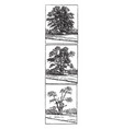 chestnut blight stages vintage vector image vector image