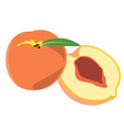 pair of peaches vector image