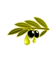 Olives on a leafy twig dripping oil vector image vector image