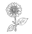 stroke sunflower plant on white background vector image vector image